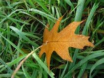 Rocío del otoño por la mañana Imagenes de archivo