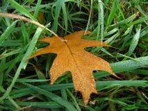 Rocío del otoño por la mañana Imagen de archivo