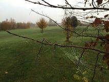 Rocío del web de araña Fotos de archivo libres de regalías