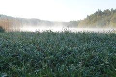 Rocío en el lago Fotos de archivo