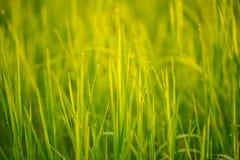 Rocío en hierba Fotos de archivo libres de regalías