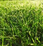 Rocío en hierba por la mañana fotos de archivo libres de regalías