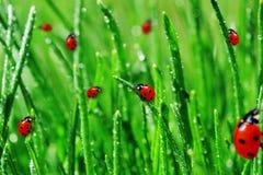 Rocío en hierba verde Fotografía de archivo