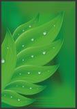 Rocío en hierba verde Fotos de archivo