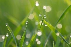 Rocío en hierba verde Foto de archivo