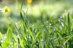 Rocío en la hierba Fotos de archivo libres de regalías