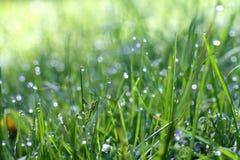 Rocío en la hierba Fotografía de archivo libre de regalías