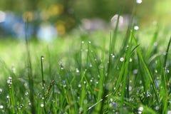 Rocío en la hierba Foto de archivo libre de regalías