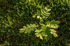 Rocío en las hojas Foto de archivo