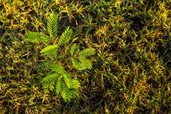 Rocío en las hojas Fotos de archivo