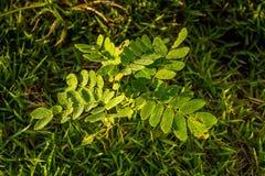 Rocío en las hojas Imagen de archivo