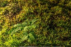 Rocío en las hojas Imagen de archivo libre de regalías
