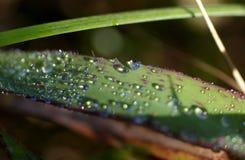 Rocío en las hojas del verde en el bosque foto de archivo