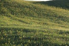 Rocío en prado Foto de archivo libre de regalías