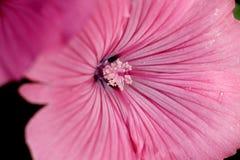 Rocío en una flor Fotos de archivo
