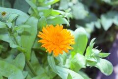 Rocío en una flor Imagen de archivo