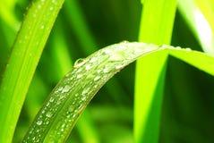 Rocío en una lámina de la hierba Fotos de archivo