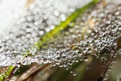Rocío en Web de araña fotos de archivo