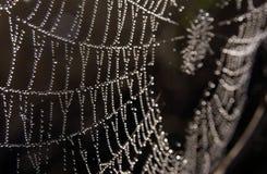 Rocío en Web de araña Fotografía de archivo libre de regalías