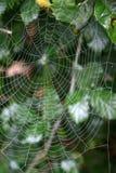Rocío en Web de araña imagen de archivo
