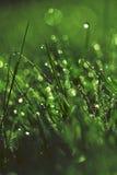 Rocío fresco de la mañana en hierba Fotografía de archivo libre de regalías