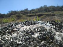 Roca con las plantas Imagenes de archivo