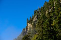 Roca con los árboles Foto de archivo