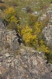 Roca con los abedules Foto de archivo libre de regalías