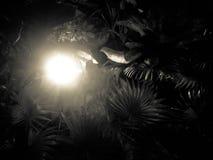 Roca con muchos árboles próximos Imagen de archivo libre de regalías