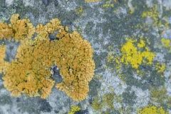 Roca cubierta de musgo Foto de archivo libre de regalías