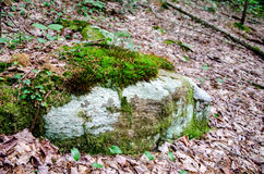 Roca cubierta de musgo Fotos de archivo