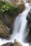 Roca cubierta de musgo Foto de archivo