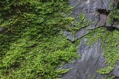 Roca cubierta de musgo Fotos de archivo libres de regalías