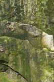 Roca cubierta de musgo de la piedra caliza del fondo Imagenes de archivo