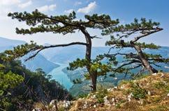 Roca de Banjska del punto de vista en la montaña de Tara que mira abajo al barranco del río de Drina Imagen de archivo
