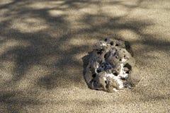 Roca de la lava en la playa Fotografía de archivo libre de regalías