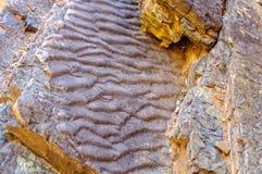 Roca de la onda - garganta de Bunyeroo Fotos de archivo