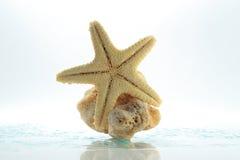 Roca de las estrellas de mar y del shell Foto de archivo libre de regalías