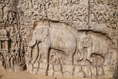 Roca de los elefantes en Mamallapuram Imagen de archivo