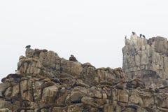 Roca de los lobos imagenes de archivo