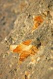 Roca de Merl Foto de archivo libre de regalías