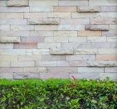 Roca de pared con las hojas verdes hermosas Imagenes de archivo