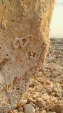 Roca de Sunny Summer Day Sea Side con el fósil fotografía de archivo