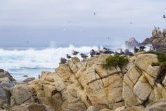 Roca del pájaro con los pájaros de agua gaviotas y pájaros que se sientan en las rocas, Monterey, California de los cormoranes Fotografía de archivo