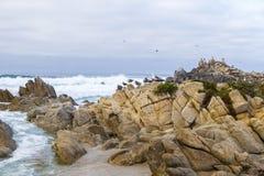 Roca del pájaro con los pájaros de agua gaviotas y pájaros que se sientan en las rocas, Monterey, California de los cormoranes Imagen de archivo libre de regalías