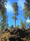 Roca del pino Imagenes de archivo