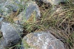 Roca e hierba Fotografía de archivo libre de regalías