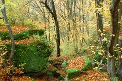 Roca en bosque Fotos de archivo