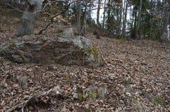 Roca en bosque Fotografía de archivo