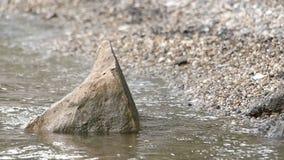 Roca en el agua cerca de la orilla almacen de metraje de vídeo